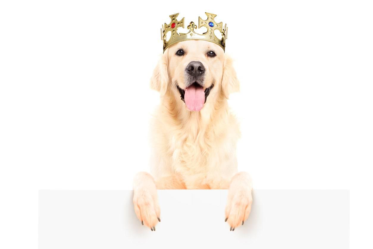 nomi di cani nobili