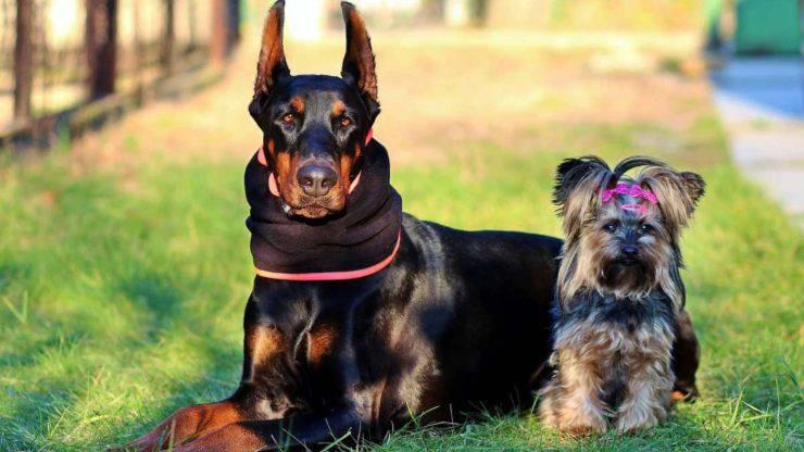 classificazione razze di cani taglie
