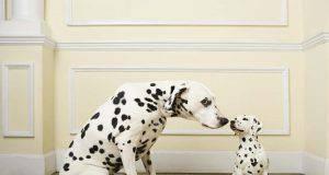 Nomi di cani famosi