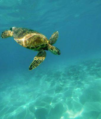 curiosita sulle tartarughe marine
