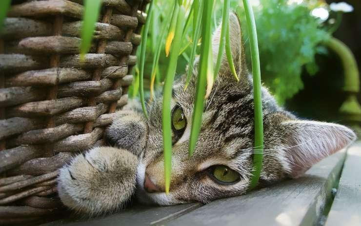 erbe digestive gatto