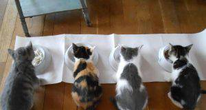 ricette per gatti