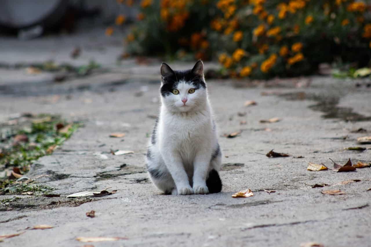 La compostezza del gatto (Foto Pixabay)