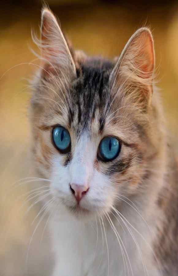La bellezza del gatto (Foto Pixabay)