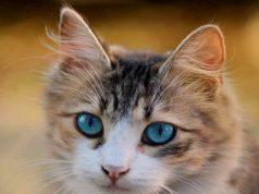 Occhi azzurri in primo piano (Foto Pixabay)