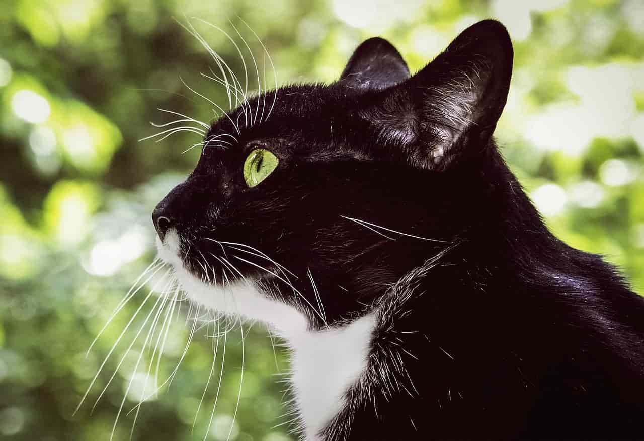 La curiosità del gatto (Foto Pixabay)