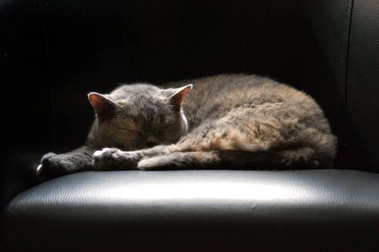 Sonno del gatto