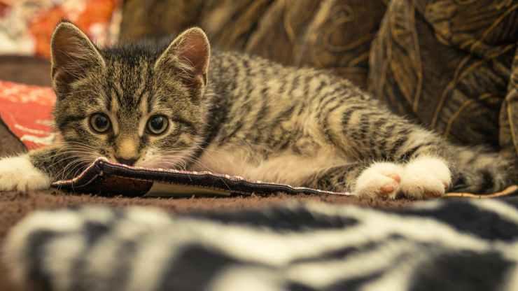 Gatto spaventato (Foto Pixabay)