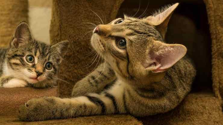Gatti sereni (Foto Pixabay)