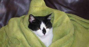 malattie respiratorie gatto