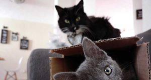 gatti amano scatole