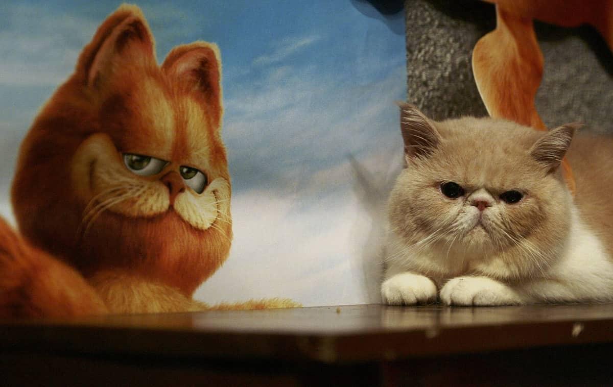 Nomi di gatti dei film