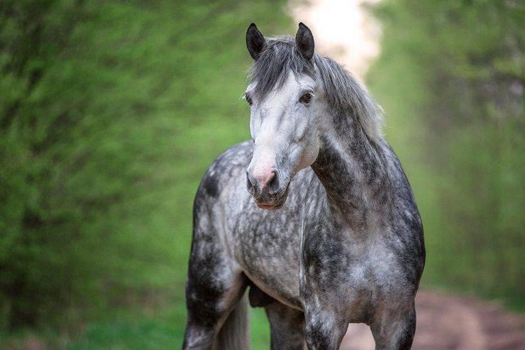 come vede il cavallo