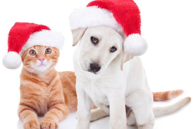 animali in affitto feste natale