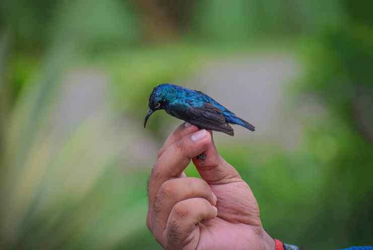 Uccellino stremato (Foto PIxabay)