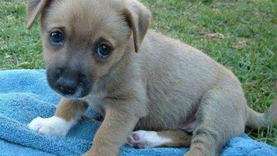 adottare cucciolo o cane adulto