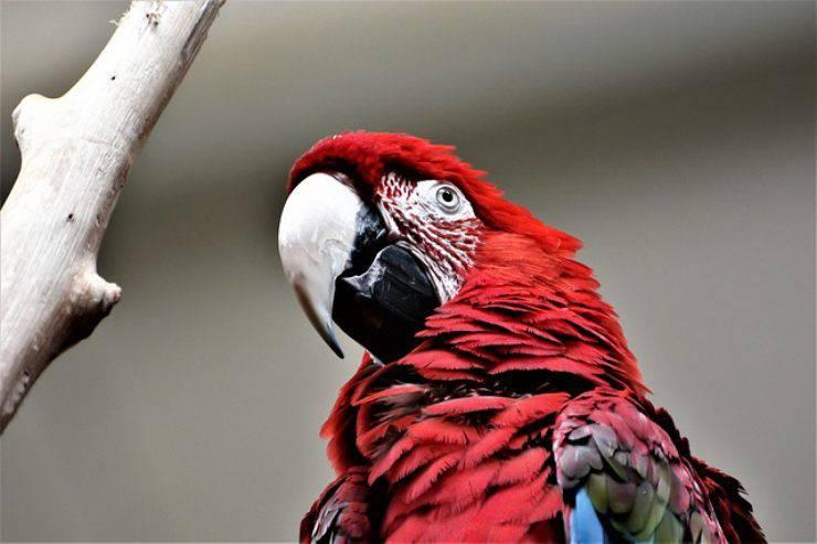 cura del pappagallo in inverno