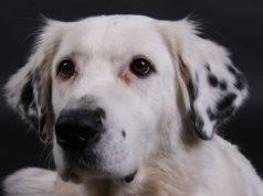 falsi miti cane