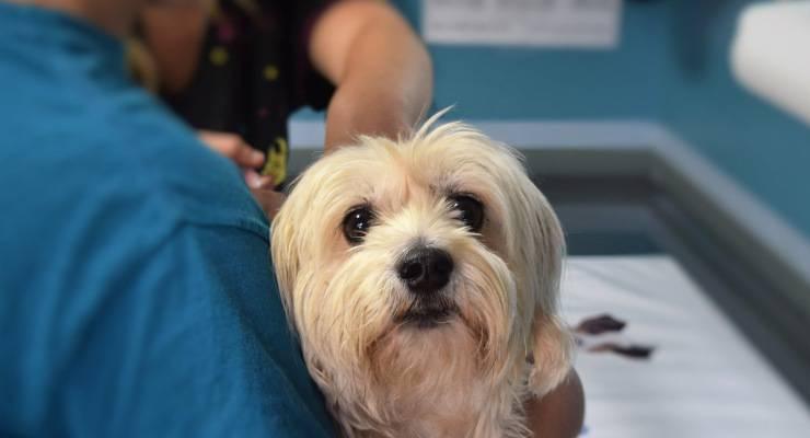 cane trattamento medico