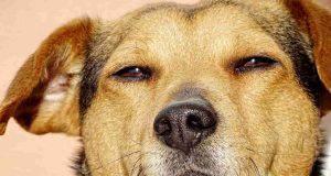 cose che i cani non sopportano