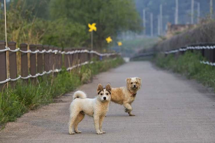Cani per strada (Foto Pixabay)