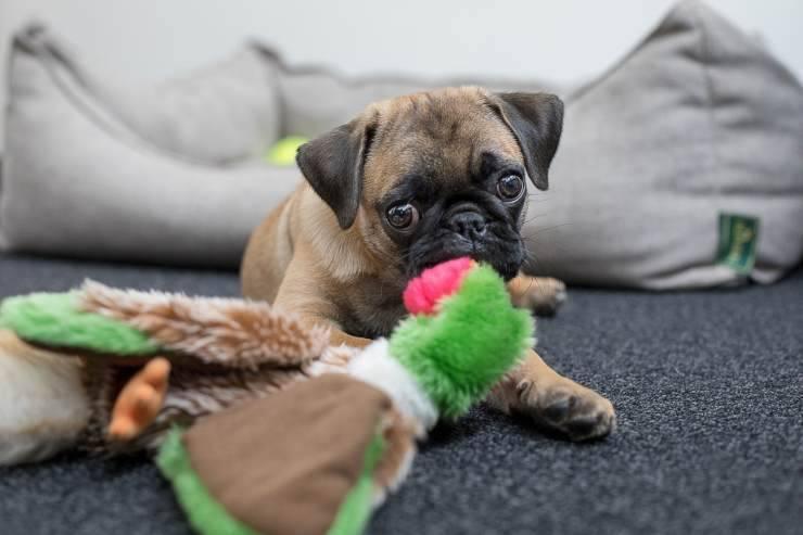 comportamento cucciolo cane