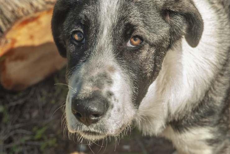 maltrattamenti sugli animali cane randagio eroe