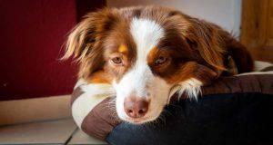 infezione orecchio cane rimedi naturali