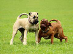 cane ha paura degli altri cani