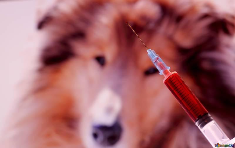 tumore cane terminale
