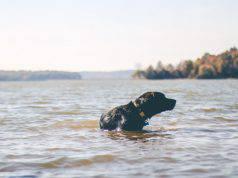 cane pericolo fiume