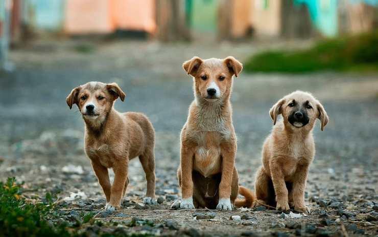 Cani in allerta (Foto Pixabay)