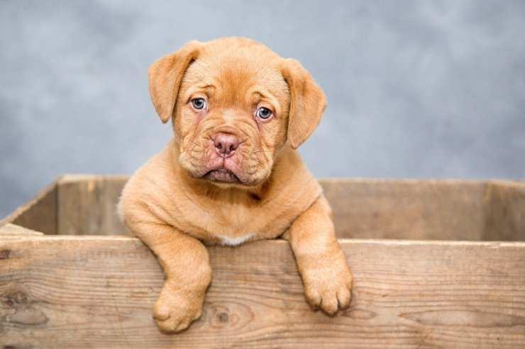 cucciolo pauroso (Foto Pixabay)