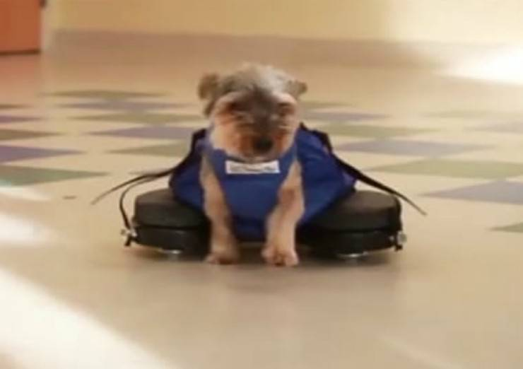Cagnolina disabile (Foto video Walkin'Pets)