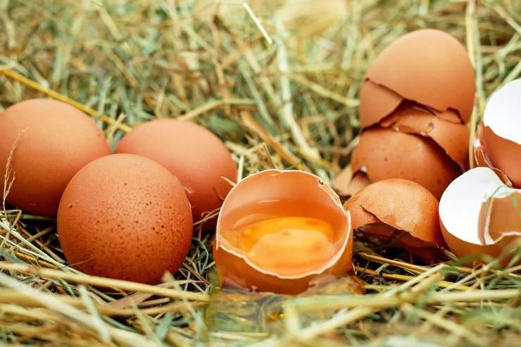 Uova e galline