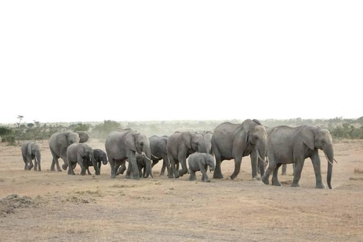 curiosita sugli elefanti