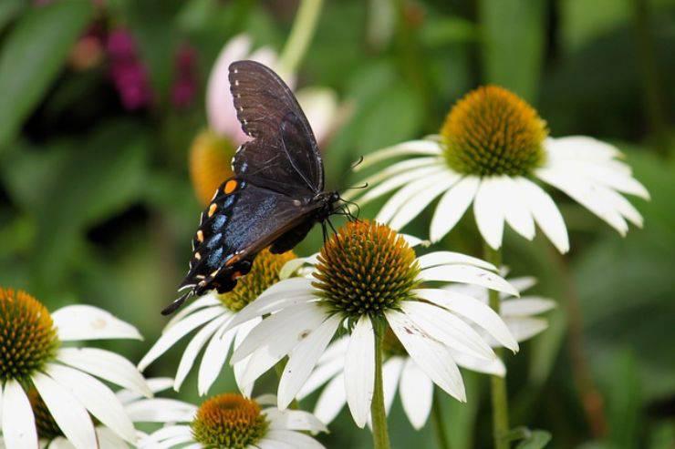 curiosita sugli insetti