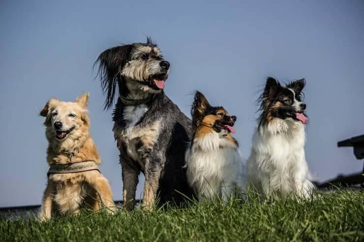 Quattro cani (Foto Pixabay)