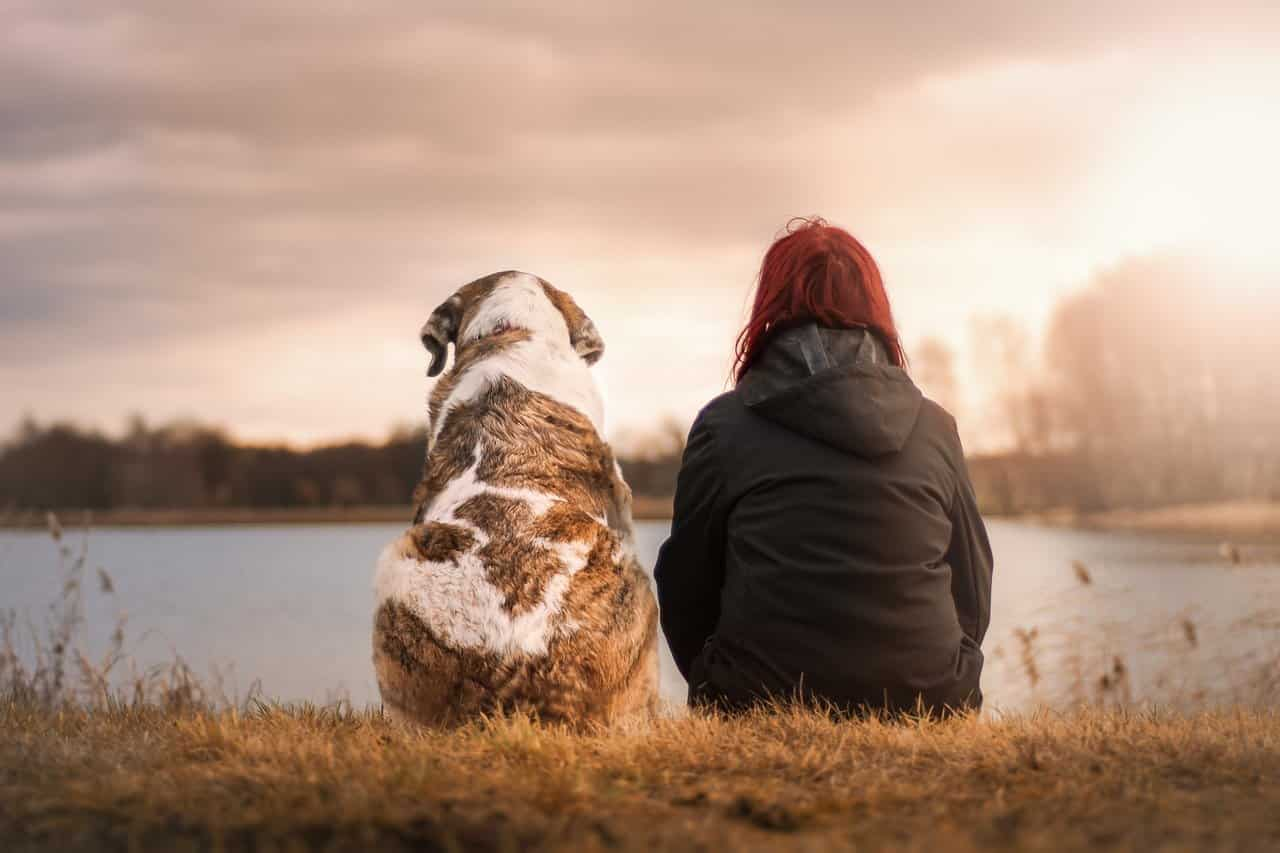 Cane e la sua padroncina (Foto Pixabay)