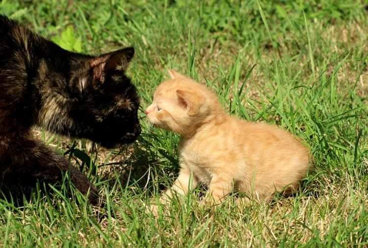 gatti si annusano