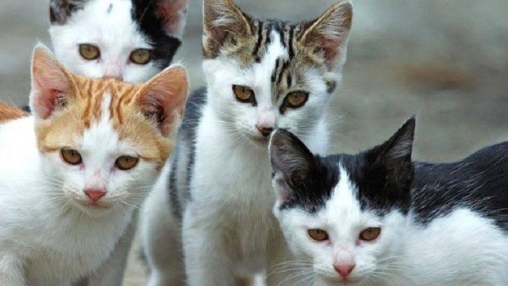 gatti molti gattara