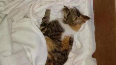 gattina bastonate lucera