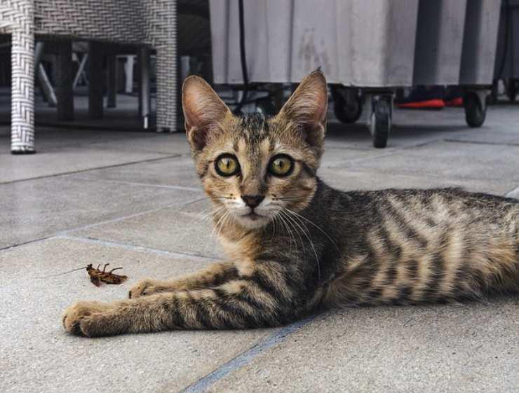 gatto insetto