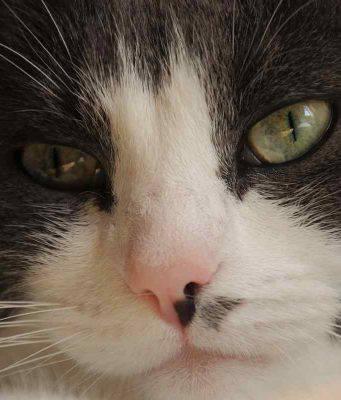 gatto malato (2)