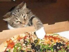 gatto puo mangiare la pizza