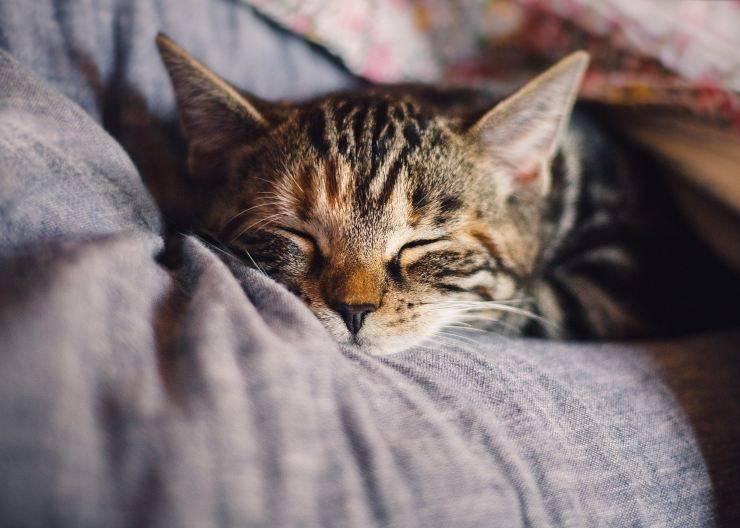 Gattino su letto