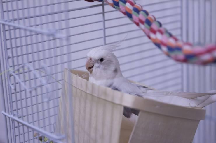 pappagallo casa