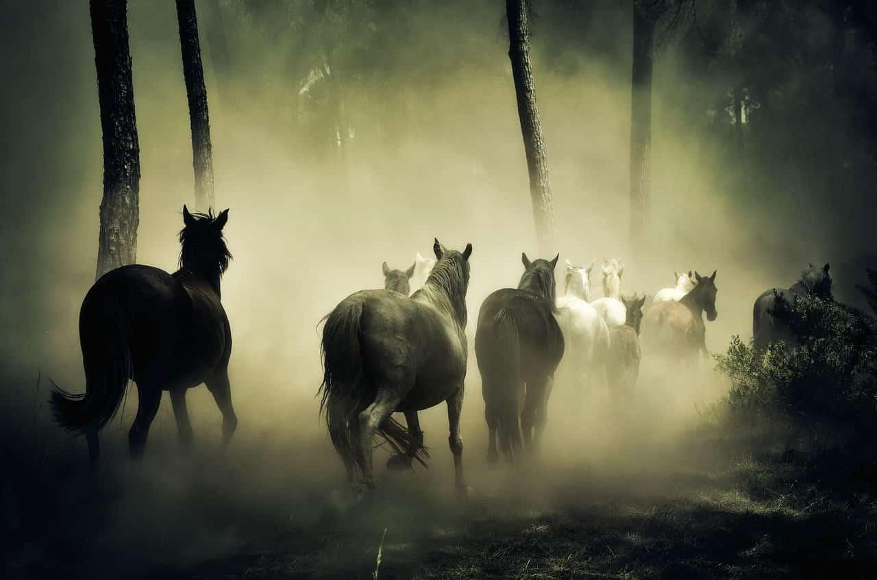 Equini in velocità (Foto Pixabay)