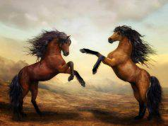 Cavalli (Foto Pixabay)