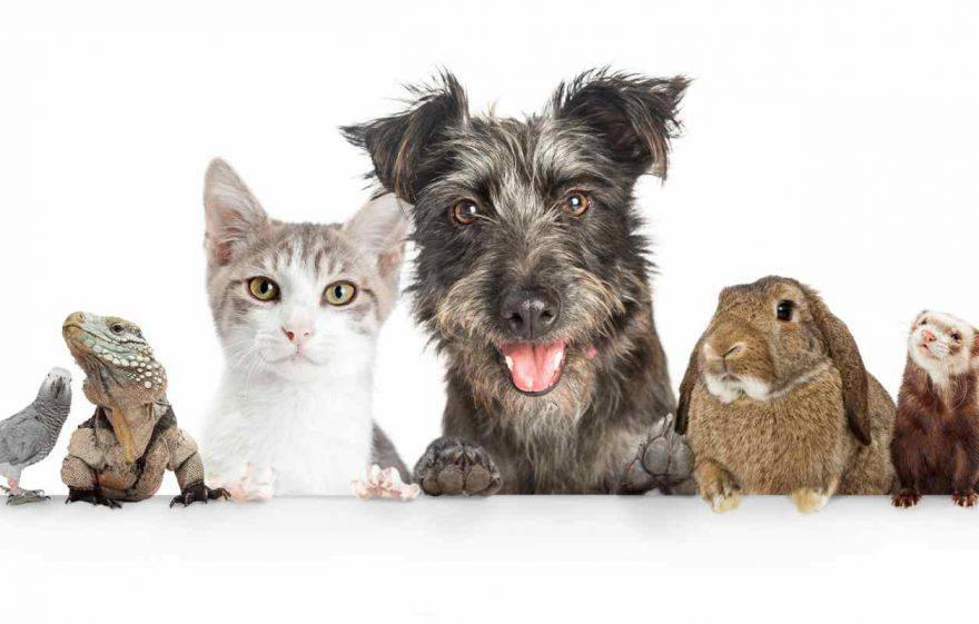 lavorare con gli animali nuovi mestieri
